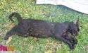 Watchout!!! Cat's Murderer in Serangoon North!!! Poison10