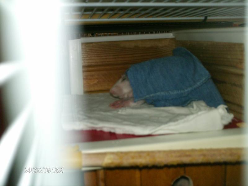 Comment dorment vos rats? - Page 3 Gizmo_10
