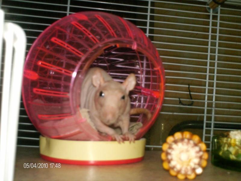 Comment dorment vos rats? - Page 4 Gizmo_11