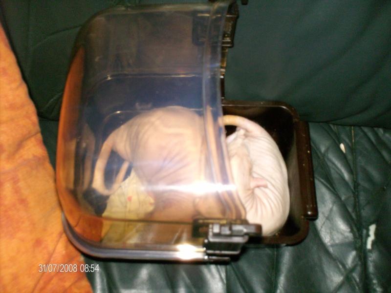 Comment dorment vos rats? - Page 4 Gros_e10