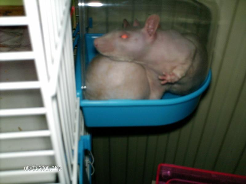 Comment dorment vos rats? - Page 4 Les_fi10