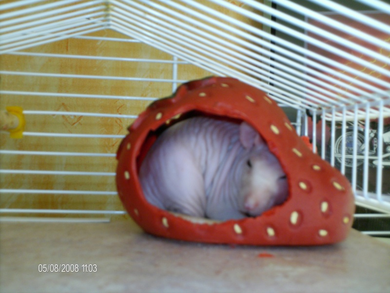 Comment dorment vos rats? - Page 4 Lulu_d13