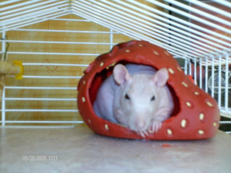 Comment dorment vos rats? - Page 4 Lulu_d14