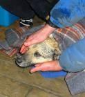Un chien sauvé de la banquise 44314510