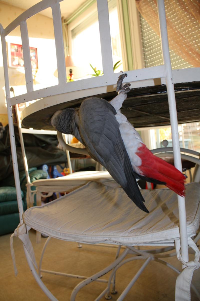 nouvelles photos de CHAMALOW nov.2010 05610