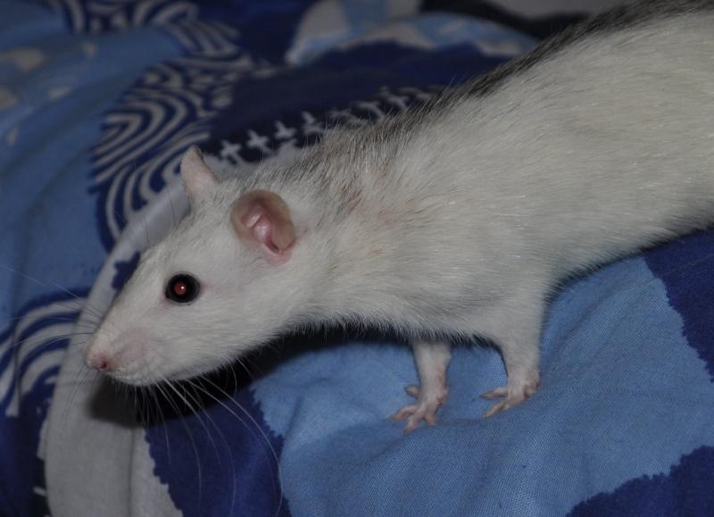 Yeux Etranges d'un raton Dsc_0412