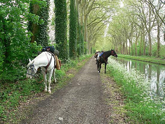 Le Berrichon 2009 : Bourges - Pyrénées Ouest-Est et retour P1020413