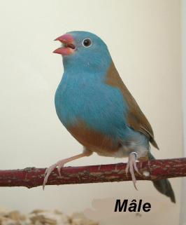 le cap bleu Dyn01011