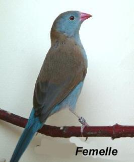 le cap bleu Dyn01012