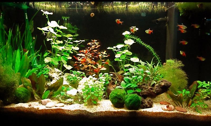 Quelques photos de mon aquarium Img_0810