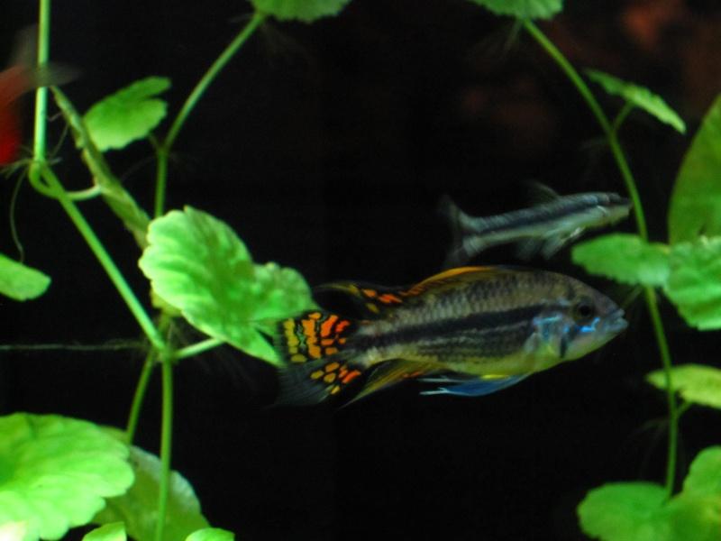 Quelques photos de mon aquarium Img_1112