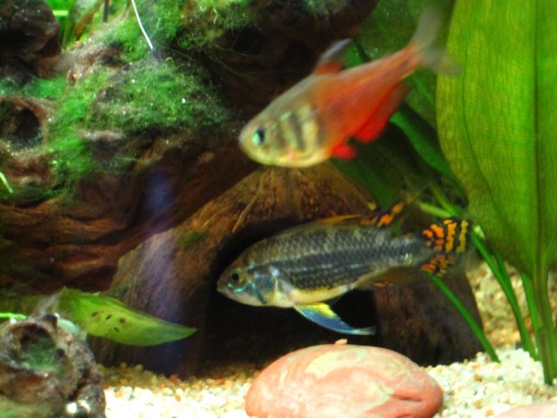 Quelques photos de mon aquarium Img_1113