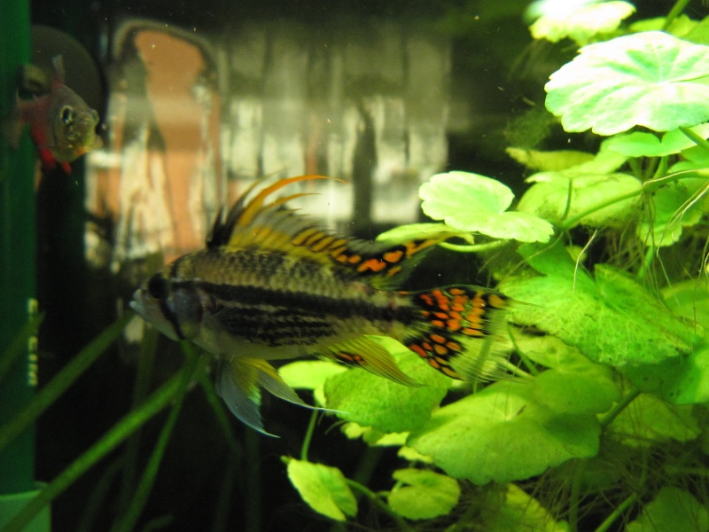 Quelques photos de mon aquarium Img_1215