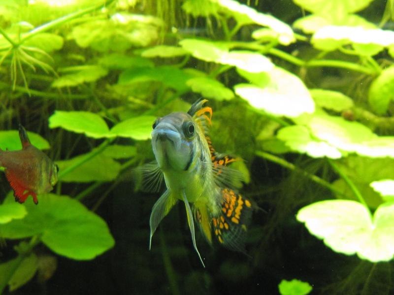 Quelques photos de mon aquarium Img_1216