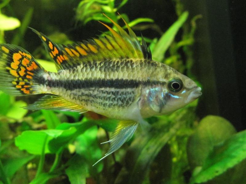 Quelques photos de mon aquarium Img_1217
