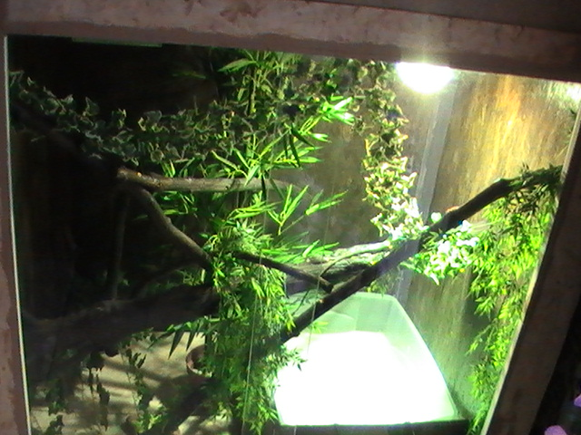 ma salle tropicale !! Pic_6817