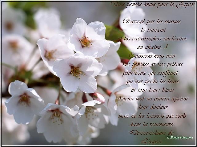 Nos pensées pour le Japon - Page 2 Fleur_10