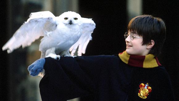 Ces enfants acteurs qui nous impressionnent Harry-11