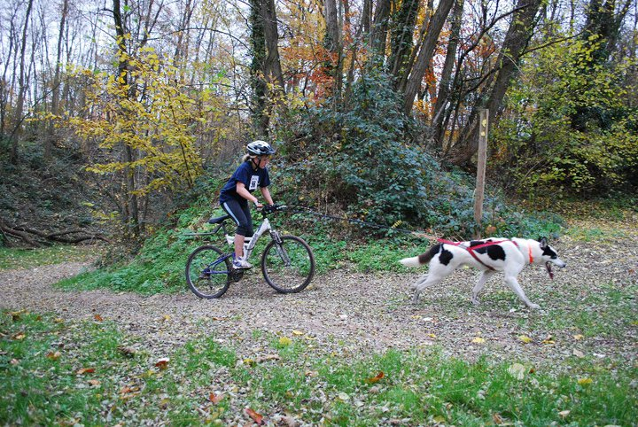 Canicross, courir avec son chien - Page 4 72769_10