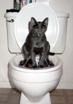 MARSBARS PICS Cat110