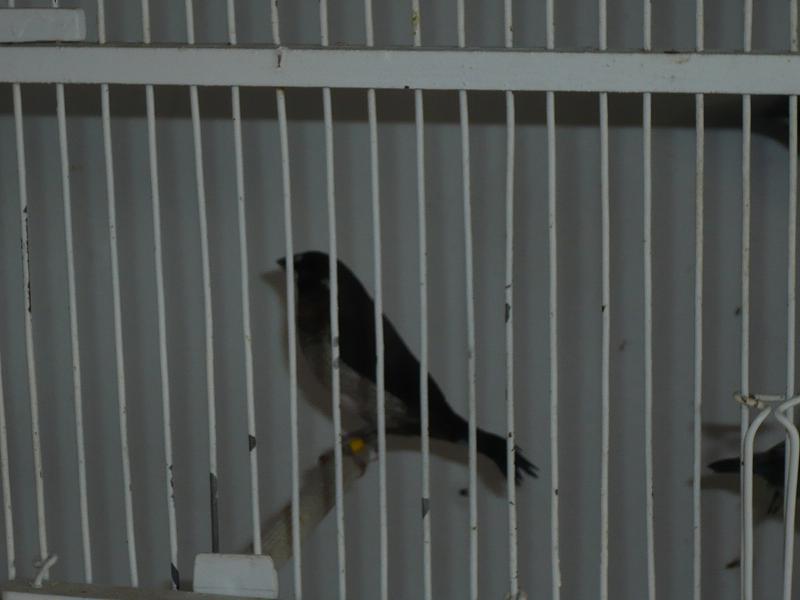Photos de mon élevage - Page 2 Moinea10