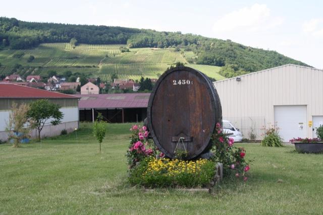 Vins et Crémant d'Alsace Thierry- Martin Img_2114