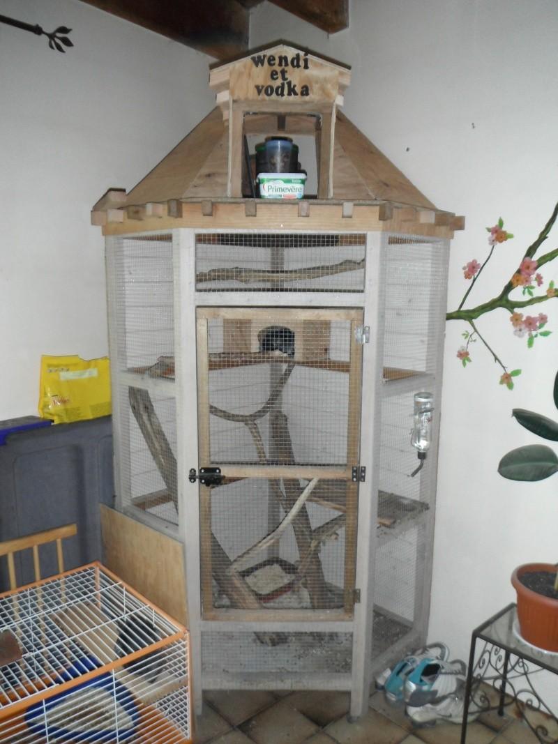 voici mes cages Dscf9010