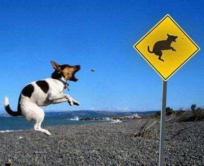 FUNNY PICTURES! Dog-ju10