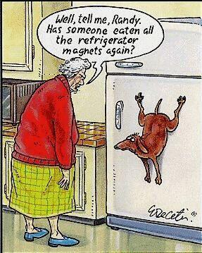 Dog Cartoons Funny-18