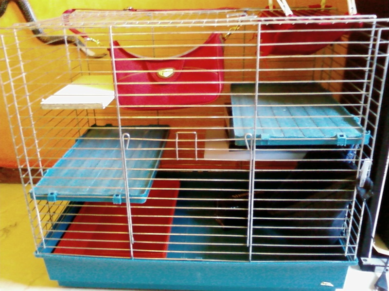 Cage dans le  76 Sp_a1710