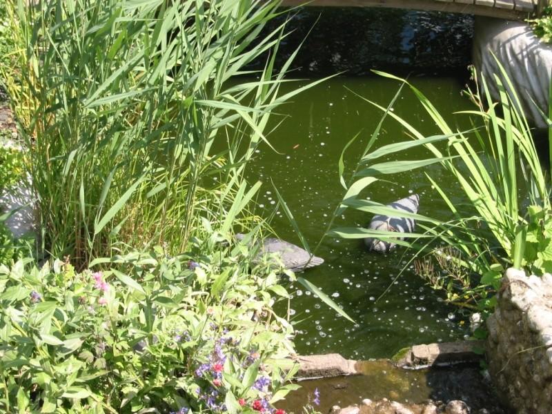 bassin de steven Img_0026