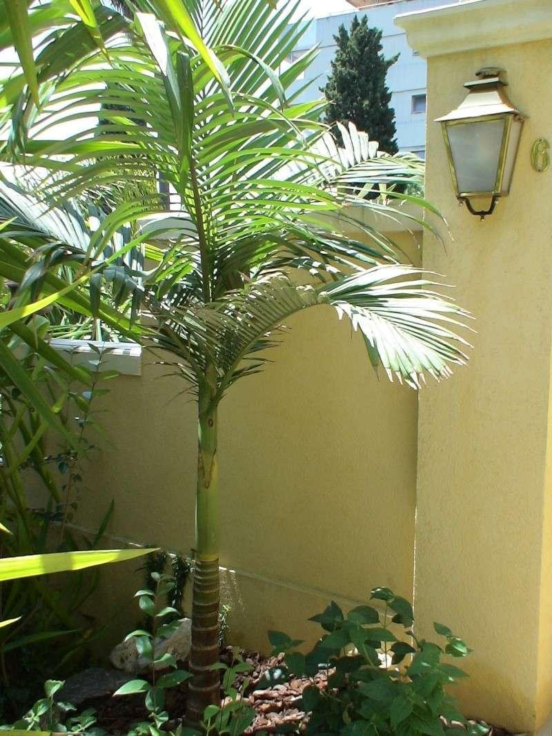 Le jardin tropical de Thierry Archon14