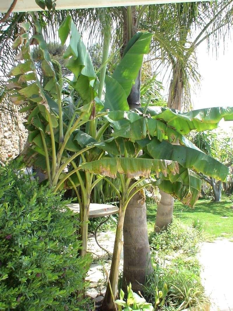Le jardin tropical de Thierry Musa_v11
