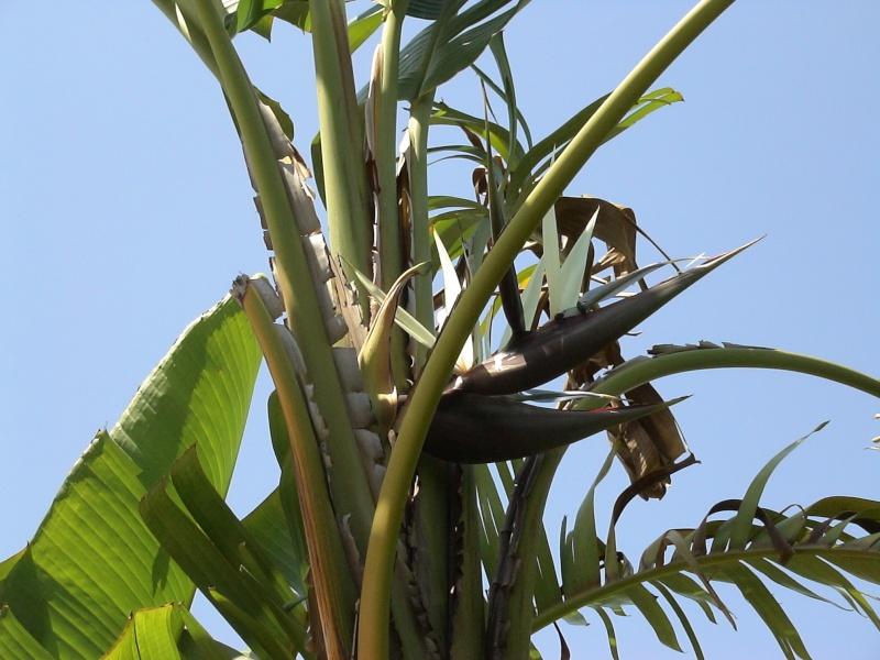 Le jardin tropical de Thierry Streli10