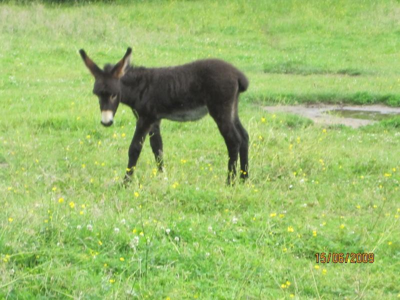 Besoin de conseils pour un petit âne! Img_0412