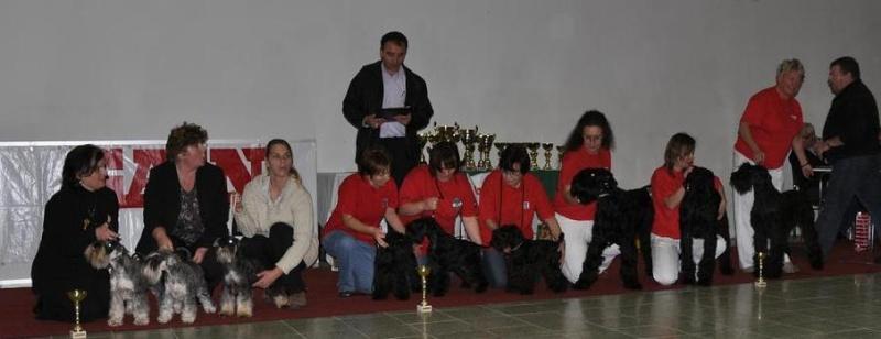 Club Schnauzer Show - Nitra Slovakia 2010 Dsc_0110