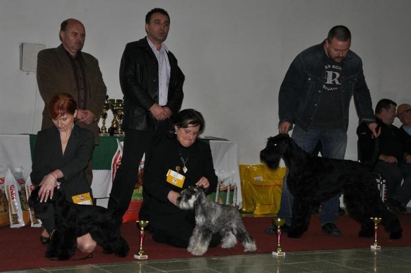 Club Schnauzer Show - Nitra Slovakia 2010 Dsc_0111