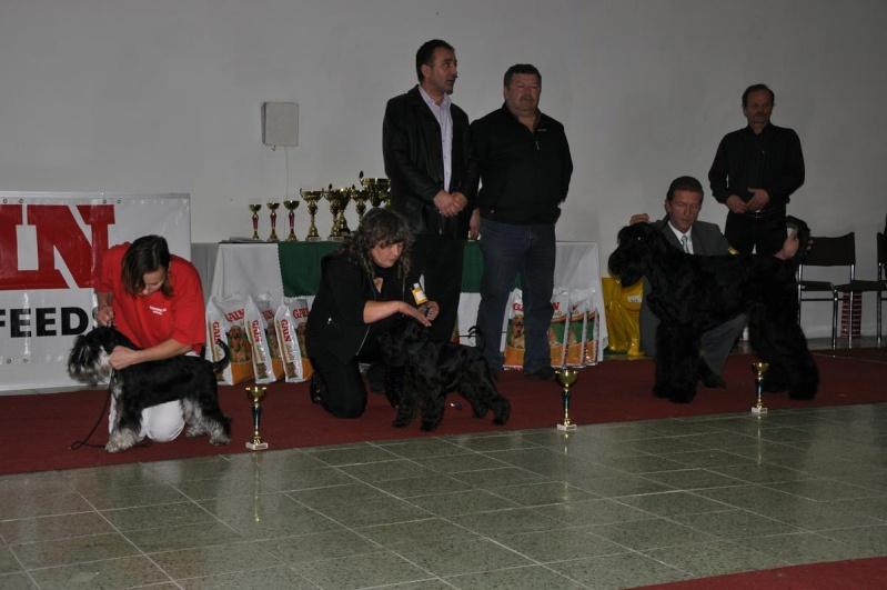 Club Schnauzer Show - Nitra Slovakia 2010 Dsc_0112