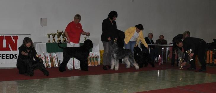 Club Schnauzer Show - Nitra Slovakia 2010 Dsc_0114