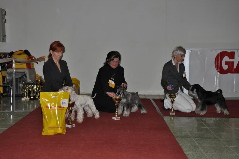 Club Schnauzer Show - Nitra Slovakia 2010 Dsc_0212