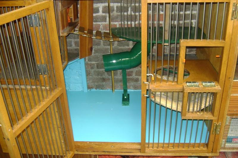 Leurs cages Dsc02810