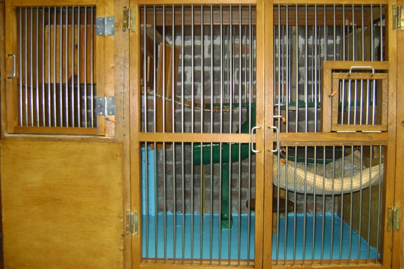 Leurs cages Dsc02914