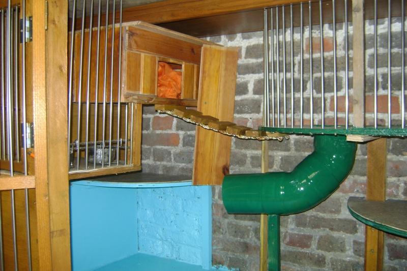 Leurs cages Dsc02915