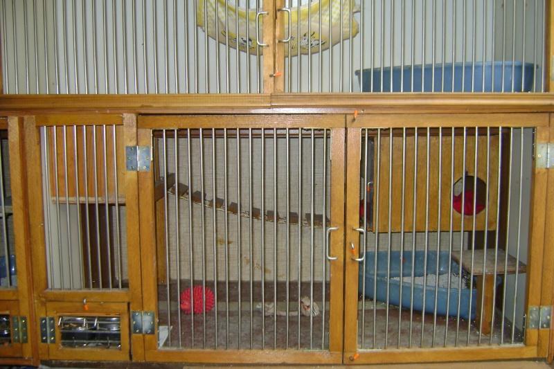 Leurs cages Dsc03010