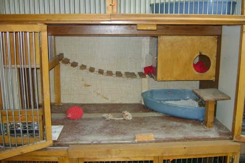 Leurs cages Dsc03011