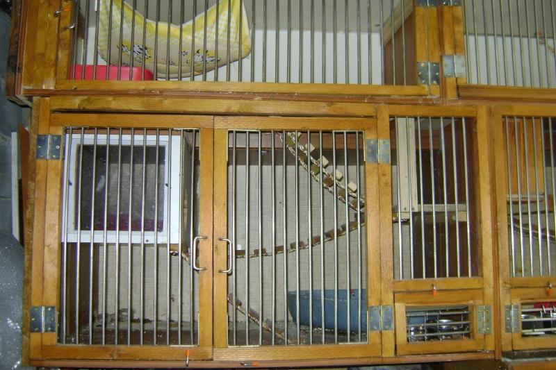 Leurs cages Dsc03013