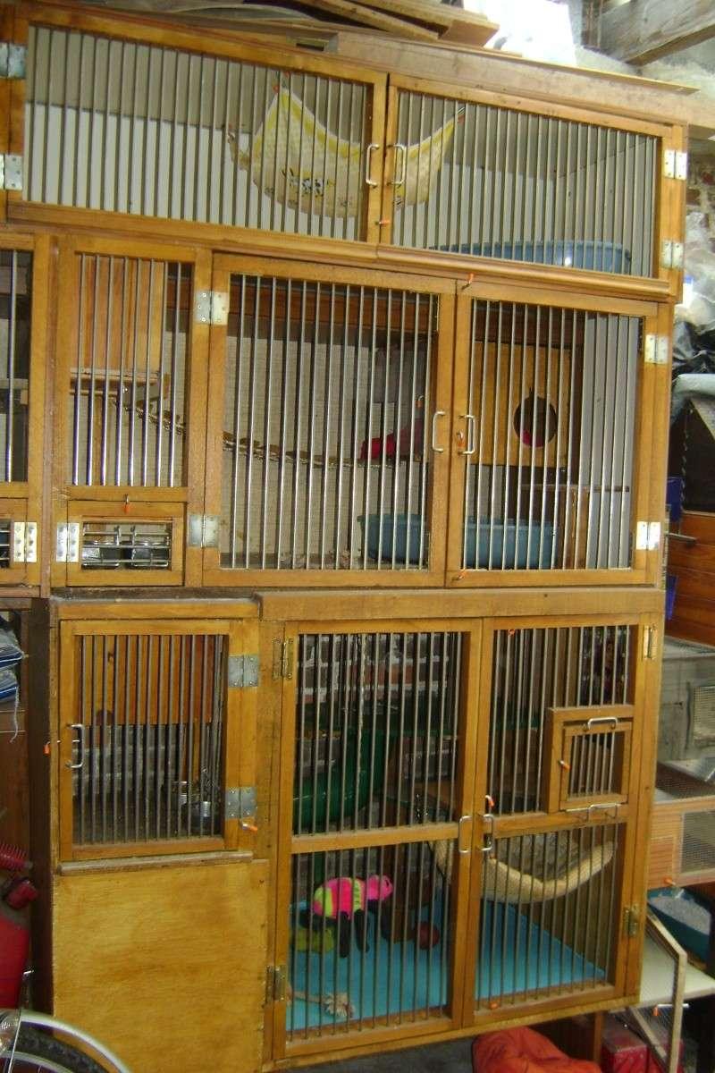 Leurs cages Dsc03014