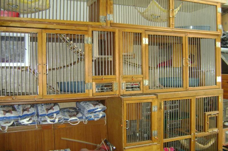 Leurs cages Dsc03015