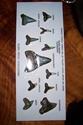 Shark teeth 100_1118