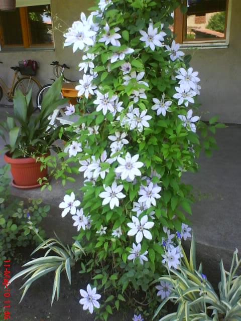slike iz moje bašte & vrta Dsc04210